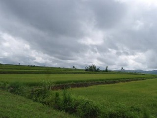 fields in negros