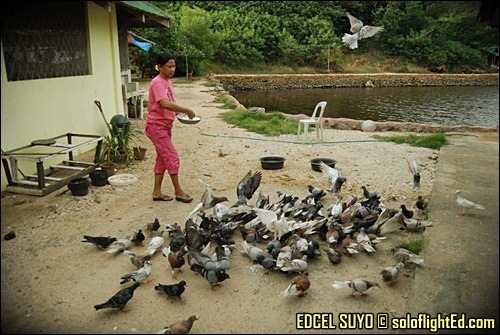 guimaras feed birds