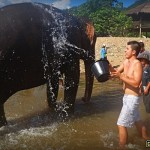 My Elephant Nature Park Experience by Save Elephant Foundation