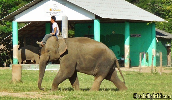 elephant and mahout