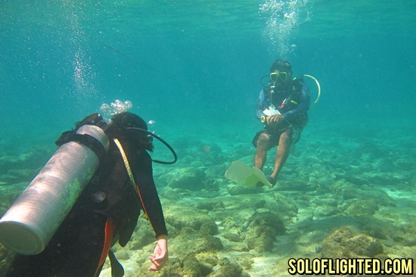 apo island fun dive