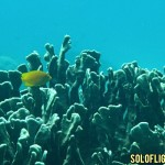Fun Dive at Apo Island in Negros Oriental