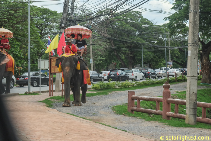 elephant-on-the-road-ayutthaya